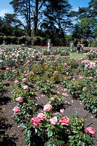 Blenheim Palace, Woodstock, near Oxford, Oxfordshire, England. Rose Garden.