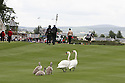 Straffan, Co Kildare, Ireland - July 7th:  A family of swans on the 9th fairway  during the first round of the Smurfit Kappa European Open on the Smurfit Course at the K Club on July 7th, 2006.. (Photo by Phil Inglis)