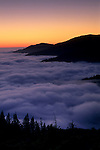 Evening fog along the coastal cliffs of the King Range, Lost Coast, near Shelter Cove, Humboldt County, CALIFORNIA
