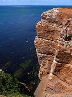 Basstölpel (Morus bassanus), Trottellumme (Uria aalge), Dreizehenmöwe (Rissa tridactyla), Vogelfelsen , westliche Steilküste, Insel Helgoland, Schleswig-Holstein, Deutschland, Europa<br /> gannet (Morus bassanus), guillemot (Uria aalge), kittiwake  (Rissa tridactyla),  bird cliff. western cliff coast, Helgoland island, district Pinneberg, Schleswig-Holstein, Germany, Europe
