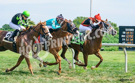 Intrepid Alex #12 and La Bruna Forte #11 both winning in a dead heat at Delaware Park on 9/5/16