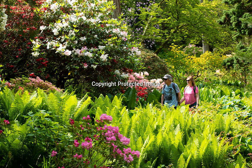 15/05/19<br /> <br /> Keith and Christine Millward.<br /> <br /> Bodnant Garden, Conwy, North Wales.<br /> <br /> All Rights Reserved, F Stop Press Ltd +44 (0)7765 242650 www.fstoppress.com rod@fstoppress.com