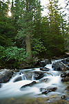Washington Idaho Border, North, Priest Lake, Nordman. Granite Creek, tumbles through cedar trees just below Granite Falls in the Roosevelt grove of ancient cedars. Kaniksu National Forest.