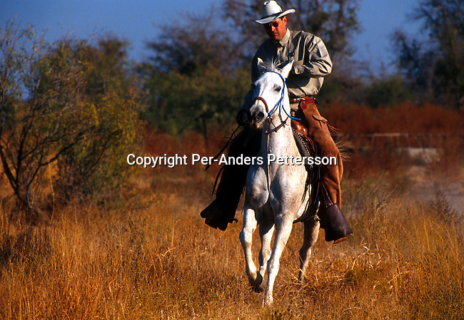 An unidentified member of a Texas Rangers unit his horse on October 22, 1999 in Midland, Texas, USA. Texas Rangers is an elit force founded in the late 19th century that mainly combated stock theft and bank robberies. There's only about one hundred officers in service in Texas. The unit has been the motive for several movies and comic books including the still popular television series Texas Rangers starring Chuck Norris..Photo: Per-Anders Pettersson