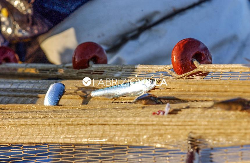 """Le reti da pesca con le """"masculine"""" rimaste intrappolate. Foto Fabrizio Villa"""