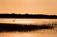 A crane walks through a marshy creek on the coast of North Carolina at sunset