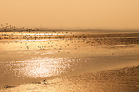 A Flock of Waterfowl Flying Along the Swale Estuary, Kent
