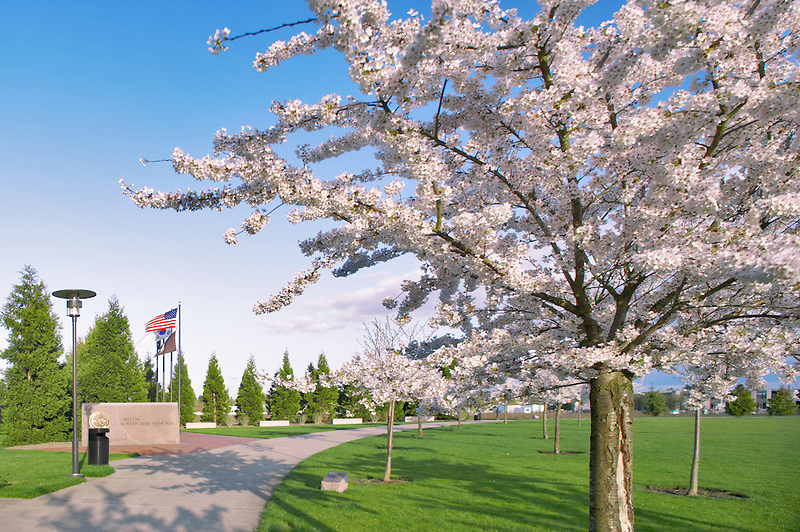 Oregon Korean War Memorial with flowering cherry trees. Wilsonville