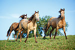 20180102  BR Herds of Horses