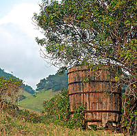 Old wooden water tank sheltered by a tree, Upcountry Maui.