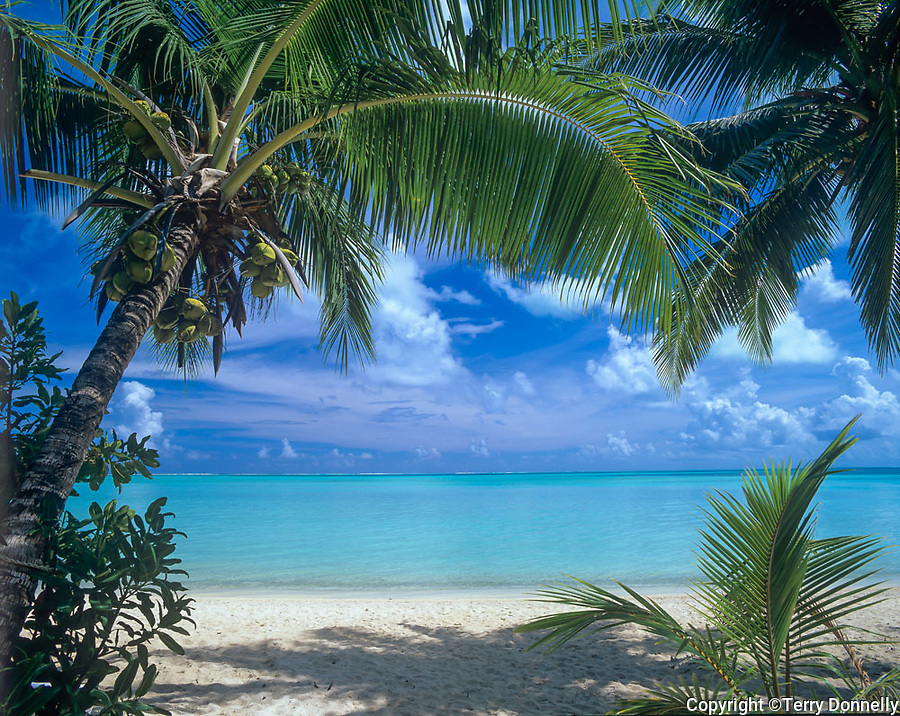 Bora Bora, French Polynesia   <br /> Coconut Palm trees (Cocos nucifera) on Matira beach<br /> with the tropocal waters of Bora Bora lagoon