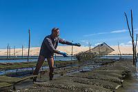 France, Gironde (33), bassin d'Arcachon, réserve naturelle du Banc d'Arguin, Sur les parcs à Huitres, en fond la Dune du Pyla Auto N°:  2013-137, Auto N°:  2013-138, Auto N°:  2013-139 Auto N°:  2013-140  // France, Gironde, Bassin d'Arcachon, Banc d'Arguin Natural Reserve, Bed oysters, Dune du Pyla in background Auto N°:  2013-137, Auto N°:  2013-138, Auto N°:  2013-139 Auto N°:  2013-140
