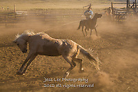 Who has who? Cowboys working and playing. Cowboy Cowboy Photo Cowboy, Cowboy and Cowgirl photographs of western ranches working with horses and cattle by western cowboy photographer Jess Lee. Photographing ranches big and small in Wyoming,Montana,Idaho,Oregon,Colorado,Nevada,Arizona,Utah,New Mexico.