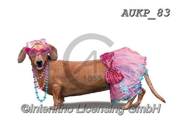 Samantha, ANIMALS, REALISTISCHE TIERE, ANIMALES REALISTICOS, funny photos, photos+++++,AUKP83,#a#, EVERYDAY ,party