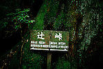 "Yakushima, June 2011 - In ""Mononoke forest"", which inspired Miyazaki for its anime movie ""Princess Mononoke""..The forest is also called ""moss forest""."
