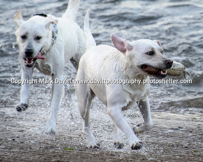 Pleasant Hill held its first of the summer Chill on the Hill June 23 at Copper Creek Lake. Some partiers were of the four legged variety.