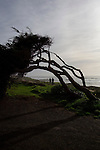 A walking path winds along the shore in Cambria, California December 21, 2014.