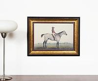 Equestrian Rentals