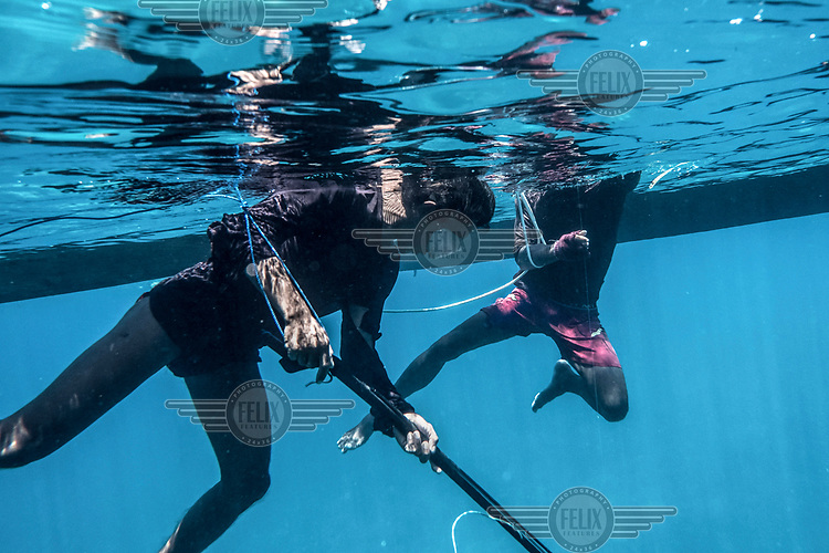 Bajau fishermen hunt for fish and octopus offshore in the Bay of Tomini.