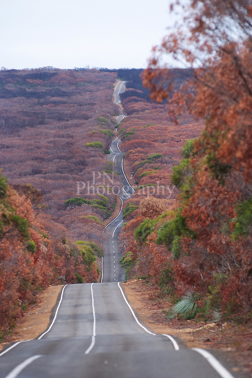 Photo taken after the fires ot the road to Remarkable Rocks on Kangaroo Island South Australia 2008