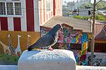 Pigeon & Street Murals, Valparaiso