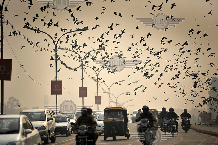 A flock of birds fly over a congested road, with vodaphone advertised on the lamp posts.