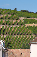vineyard geisberg grand cru ribeauville alsace france