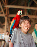 PERU, Amazon Rainforest, South America, Latin America, portrait of a Asa with Macaw bird sitting on his shoulder at the Tambopata Research Center.