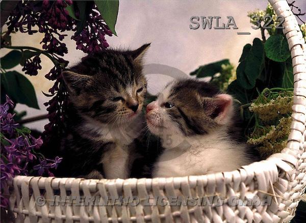 Carl, ANIMALS, photos(SWLA322,#A#) Katzen, gatos