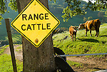 Yellow diamond traffic hazard sign: Range Cattle with range cattle, Vaira Ranch, Drytown, Calif.