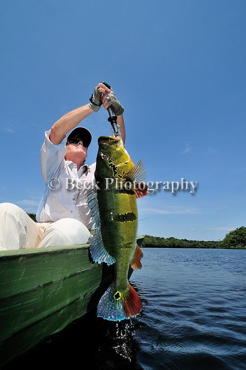 Peacock Bass,  Brazil, Agua Boa,