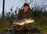 BNPS.co.uk (01202 558833)<br /> Pic: TerryFindlay/BNPS<br /> <br /> PICTURED: Terry with the Sea Bass<br /> <br /> An angler was stunned when he caught a huge sea bass two miles up a river which experts claim could be a result of improving water conditions. <br /> <br /> Terry Findlay, 62, was pike fishing along a stretch of the River Avon in Christchurch, Dorset, when he landed the whopping 14lb bass. <br /> <br /> The catch was especially unusual as sea bass, as their name suggests, live in the sea and not in a freshwater river.