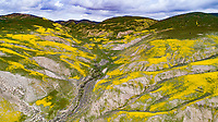Wildflower blooms in the Temblor Range, Carrizo Plain National Monument, California,