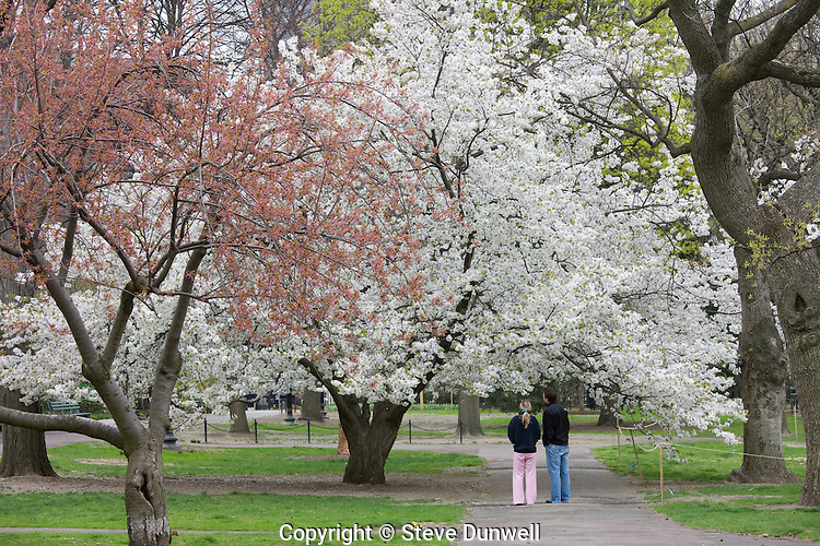 Public Garden spring day, Boston, MA