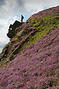 01/09/15<br /> <br /> Surrounded by stunning autumn heather, a man stands above a rock known as The Winking Man on Ramshaw Rocks in The Staffordshire Peak District near Leek.<br /> <br /> As you travel along the road below The Winking Man another rock passes in front of the rock formation making its eye appear to wink.<br /> <br /> All Rights Reserved: F Stop Press Ltd. +44(0)1335 418629   www.fstoppress.com.