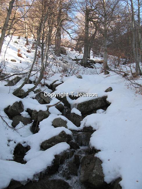 stream i the winter