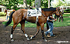 Immortal Eyes before The Hockessin Stakes at Delaware Park racetrack on 6/18/14