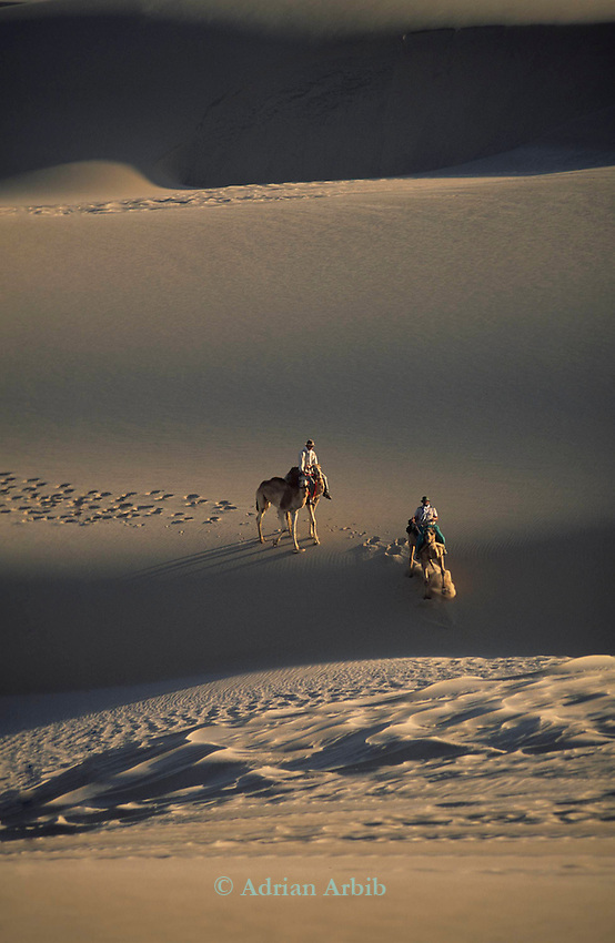 Benedict Allen, Tommy  his guide  and  camels negotiate a sand dune during his journey along the Skeleton coast of Namibia from South Africa to Angola.  Namib Naukluft desert ...