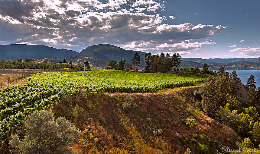 Fine Art Landscape Photograph summer scenic of the vineyards situated by beautiful Okanagan lake in British Columbia Canada.