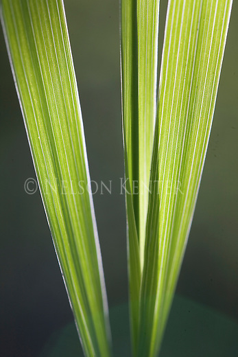 Green grass blades in sunlight