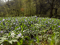FOREST_LOCATION_90192