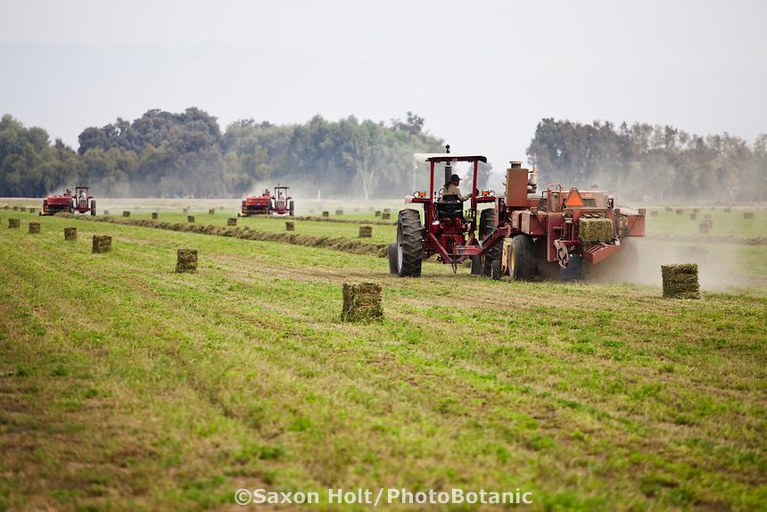 Alfalfa field hay baling, Visalia California with three New Holland tractors