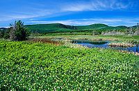 Lily-of-the-valley<br /> Forillon National Park<br /> Quebec<br /> Canada