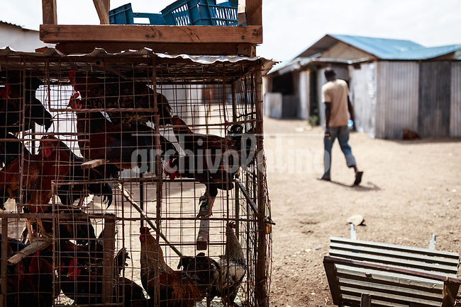 Chickens in a cage  in   Kakuma, Kenya.Kakuma refugee camp in North of Kenya. Kakuma is the site of a UNHCR refugee camp, established in 1991. The population of Kakuma town was 60,000 in 2014, having grown from around 8,000 in 1990. In 1991, the camp was established to host the 12,000 unaccompanied minors who had fled the war in Sudan and came walking from camps in Ethiopia.