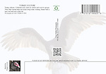 FB-S174, turkey vulture, 4x6 postcard back