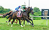 Andalusite winning at Delaware Park on 8/8/16