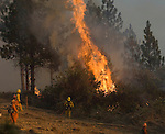 Greeley Hill, California-- July 30, 2008-Telegraph Fire-Wildfires Threaten Yosemite National Park.Union City fire fighters use hose  on trees at  Division N  to cool down fire during burn out, Wednesday. Division N is in the north east portion of the fire in the Stanislaus National Forest and North of the Merced River..Photo by Al GOLUB/Golub Photography