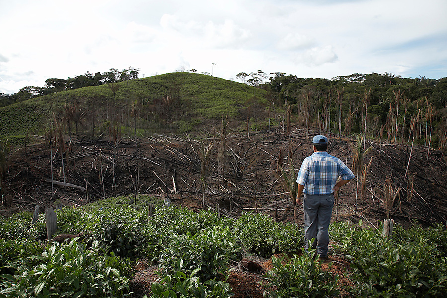Tea plantations and forest burned for planting near the village of Chimate in the Yungas region of Bolivia.