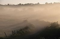 Europe/France/Auvergne/12/Aveyron/Env. de Saint-Come d'Olt: La campagne à l'aube avant le passage du troupeau lors de la transhumance en Aubrac