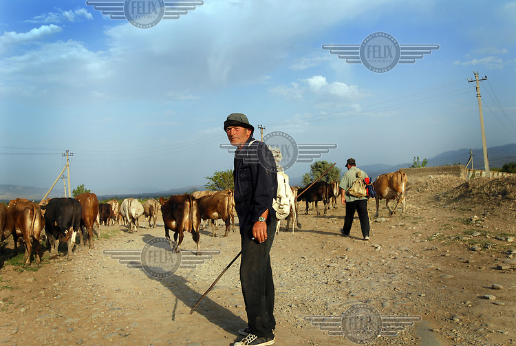 Farmer with his cattle on the outskirts of Gori.